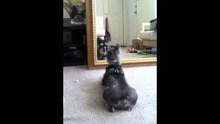 Puppy In The Mirror