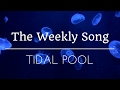 Download The Weekly Song -- Tidal Pool (Week 5) MP3 song and Music Video