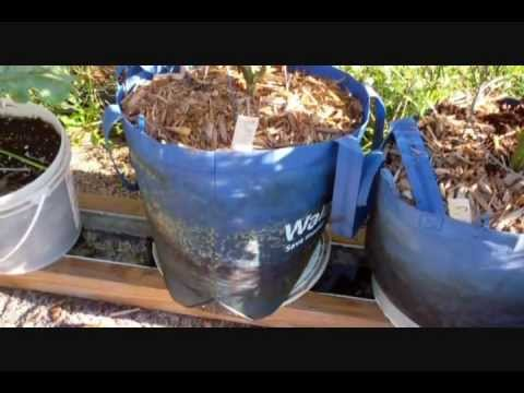 Using A Walmart Shopping Bag To Grow On The Self Watering