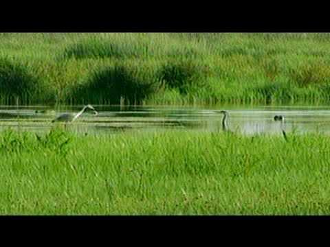 CRAM: El delta del LLobregat