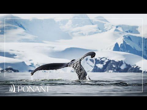 Nos croisières au Groenland: entre banquise et baleines | PONANT