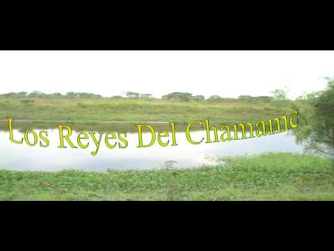 LOS REYES DEL CHAMAME   MALVITA