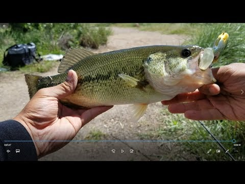 Bass Fishing Lowell Ponds State Wildlife Area(Denver, CO)