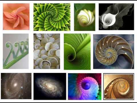 Resultado de imagen para rectángulo áureo y espiral