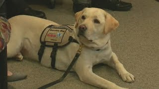 Sully, former President George HW Bush's service dog, honored on Long Island