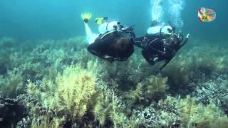 La Buga Dive Center, Bocas del Toro, Panama