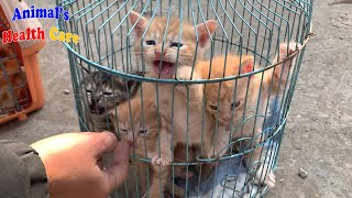 Rescue 6 baby kittens crying crazily asking for mom cats and food!