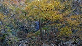 水根から鷹ノ巣山へ1紅葉の小滝へ@東京都奥多摩町