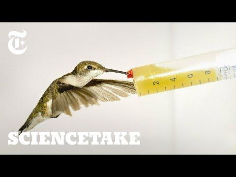 How Hummingbirds Cheat Death | ScienceTake Mp3