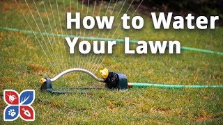 Do My Own Lawn Care - How to Water a Lawn