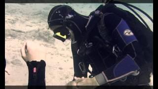 Под водой с Владимиром Мавриным - 512 - Первые уроки дайвинга.