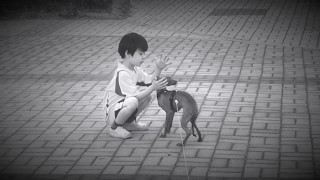 [이탈리안그레이하운드] 개를 키우세요. 개는 사랑입니다.