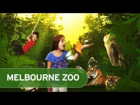 In Transit Media - Zoo's Victoria School Holidays - Bus Tv Advertising