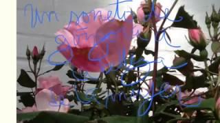 Soneto de Góngora a la belleza de la mujer