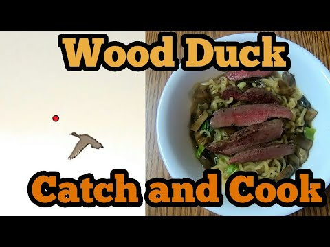 Wood Duck Catch And Cook