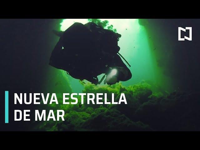 Hallan Nueva Estrella De Mar En México Creadores Universitarios