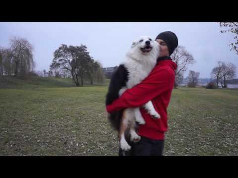 Deaf Australian Shepherd doing some tricks and obedience HD