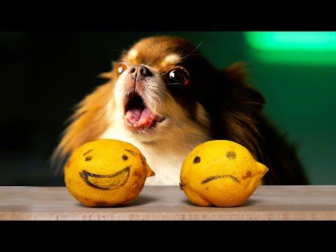 🍋 Magic Pets - ПРОСТАЯ ПЕСНЯ (Премьера Клипа на 2 000 000) 🍋