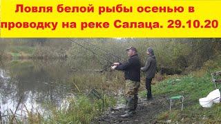 Ловля белой рыбы осенью в проводку на река Салаца Рыбалка с берега на поплавочную снасть