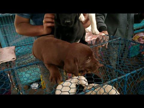 GALIFF STREET DOG MARKET CHEAPEST PRICE IN INDIA | ALL DOG MARKET SELLER