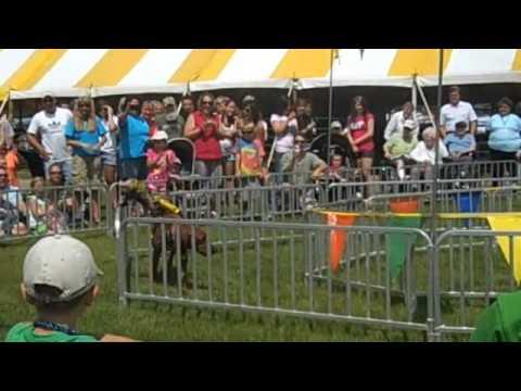 Hibbing Daily Tribune -- Banana Derby at the St. Louis County Fair