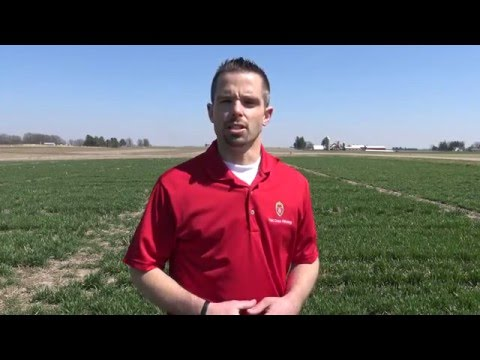 Winter Wheat: In-season