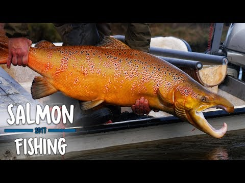 Stor Hanlaks 122cm - ELFISKERI SKJERN Å | Salmon • Lachs • Lax