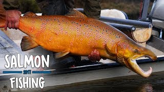 Download Video Stor hanlaks 122cm - ELFISKERI SKJERN Å | Salmon • Lachs • Lax MP3 3GP MP4