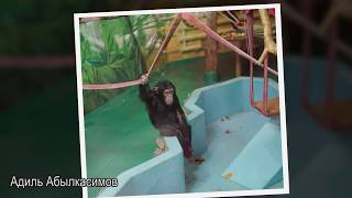 ☝▶ Часть 3. Новосибирский зоопарк зимой. В третей части фотографии животных