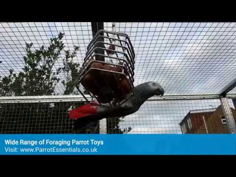 Foraging Parrot Toys