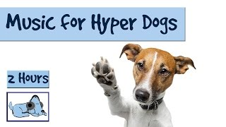 2 Hours of relaxing dog music for hyperactive dogs and pets