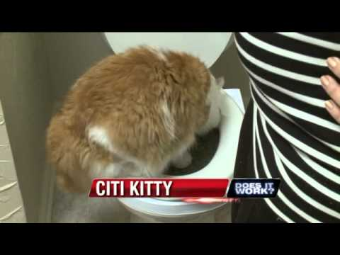 Does It Work: Citi Kitty