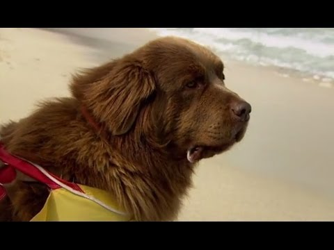 Man Vs Dog: The Life Saving Challenge | Extraordinary Animals | Series 2 | Earth