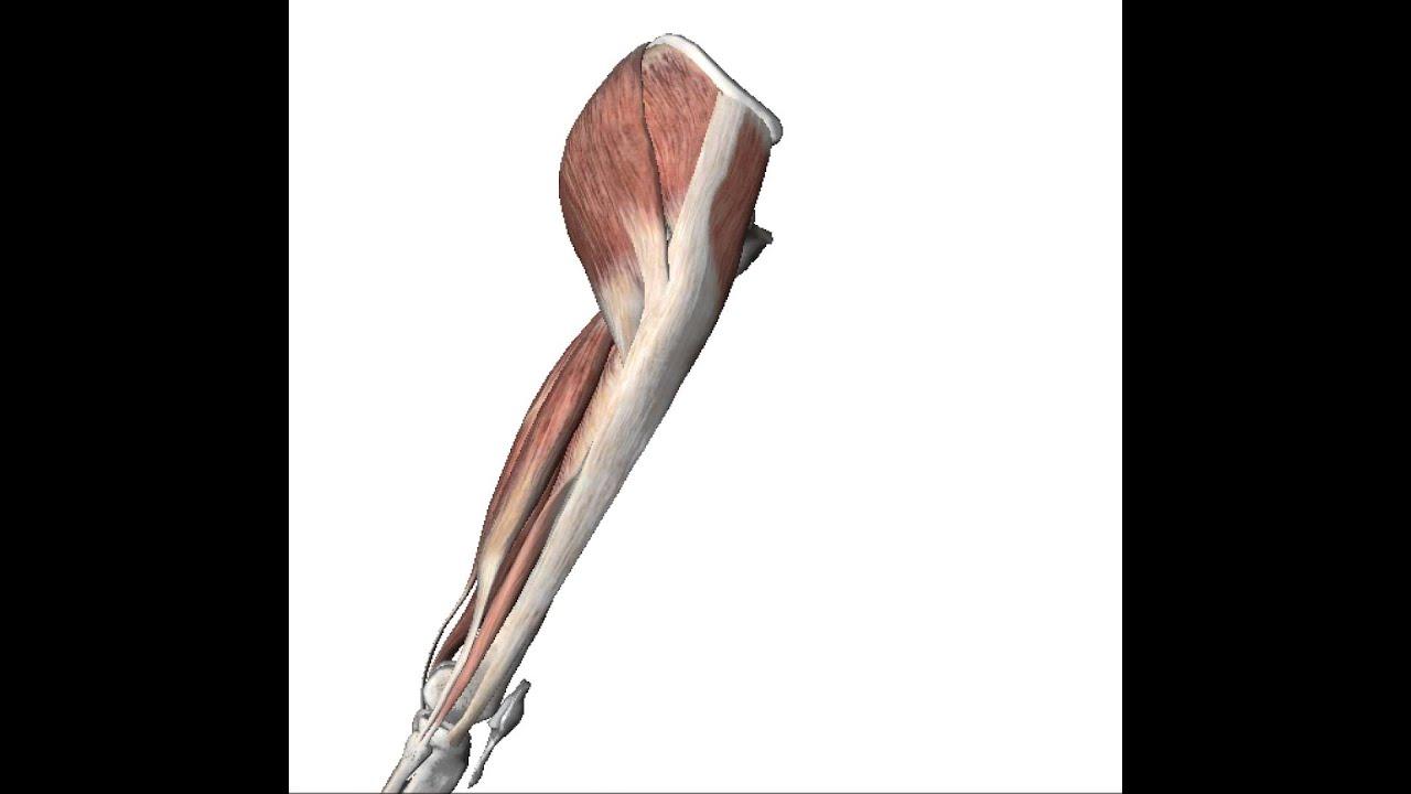 Fantastisch University Of Michigan Anatomie Videos Zeitgenössisch ...