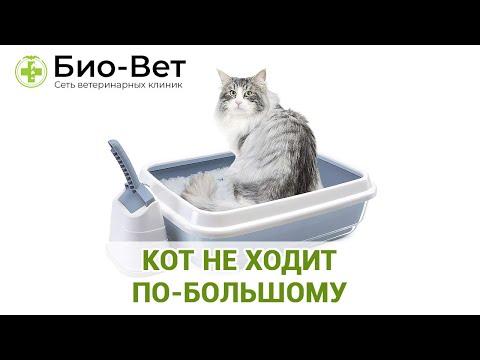 Кошка 3 дня не ходит в туалет по большому