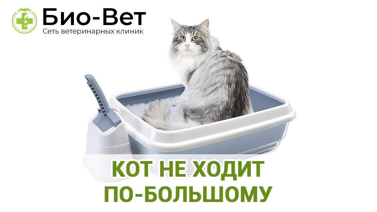 Справка ветеринар кот