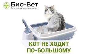 Кот не ходит по-большому. Ветеринарная клиника Био-Вет.