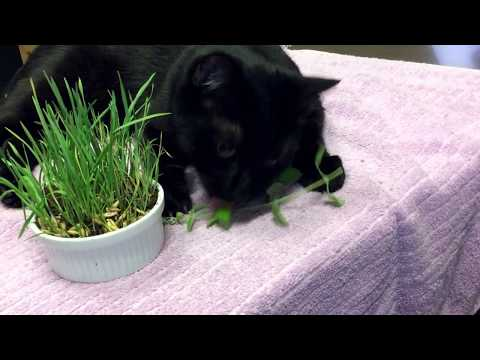 Dr. Schell, Calgary Vet Discusses Safe Plants For Cats To Eat!
