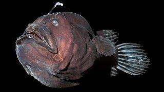 Страшные и загадочные обитатели морских глубин