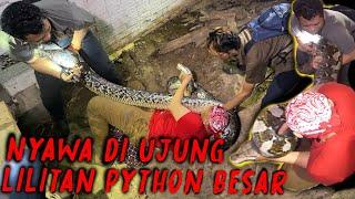 TANGKAP ULAR PITON RAKSASA, YANG TERDENGAR MALAH AUMAN HARIMAU!!!  - PART AKHIR