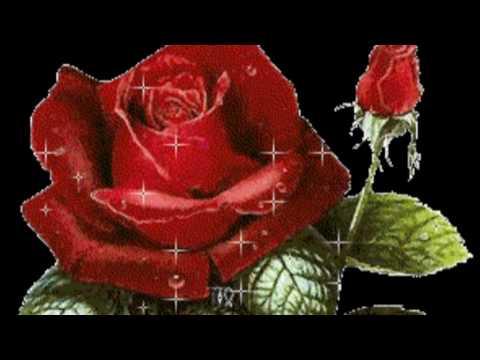 Песня роза красная моя евдокимов