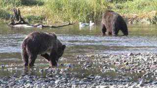 Canada, The wildlife of British Columbia thumbnail