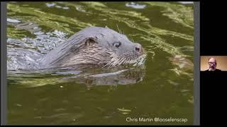 Otter Spotting in Cork City