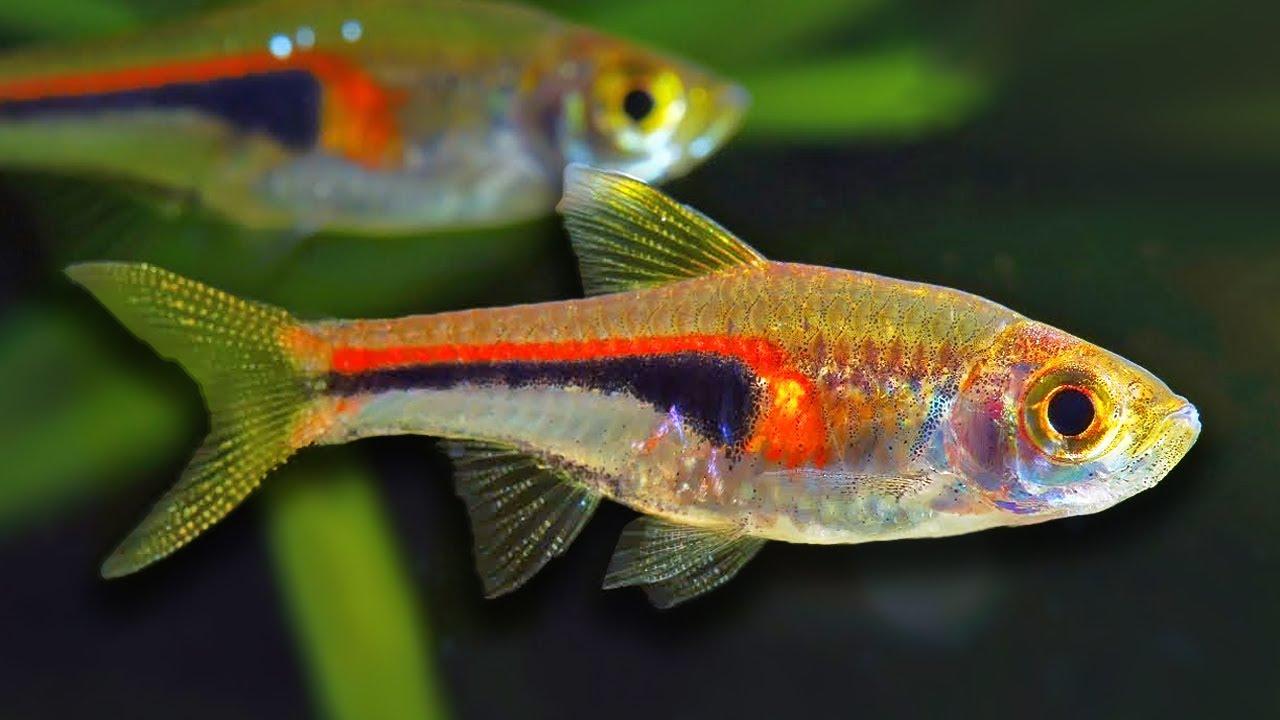 top 10 aquarium fish for beginners youtube