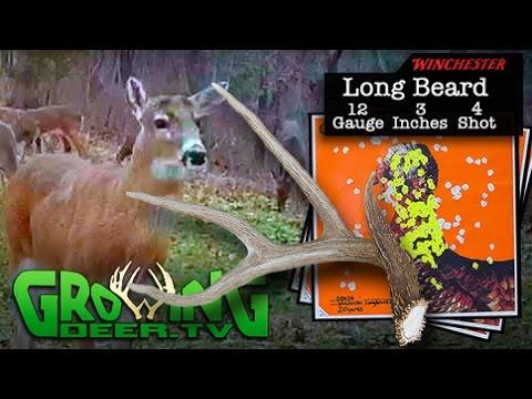 Why Bucks Shed Their Antlers (#327) @GrowingDeer.tv