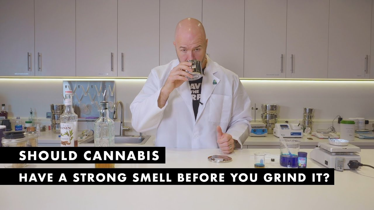 Should Cannabis Have a Strong Smell Before You Grind It?   The Science Behind Saving Terpenes