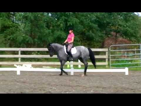 Seat & Weight Aids - 40 Fundamentals of English Riding