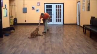 San Antonio Dog Training Co. Gracie