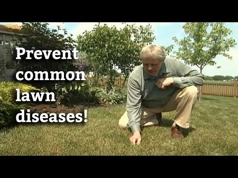Controlling Lawn Diseases -- How to Prevent & Cure Common Lawn Diseases