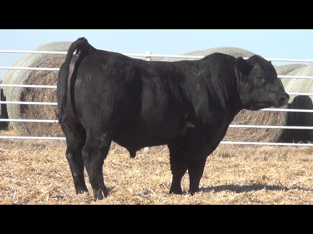Express Ranches Lot 368